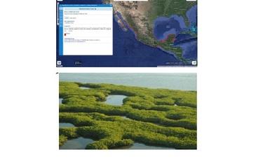manglares de mexico