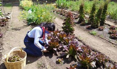 Convoca Semarnat a participar en capacitación técnica para la producción agroecológica de alimentos