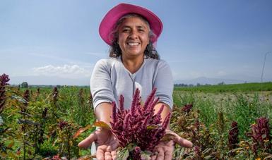 Dentro de las acciones de Abasto Rural, 15 mil 273 tiendas Diconsa estuvieron a cargo de mujeres durante 2020, lo que representó el 61 por ciento del total.
