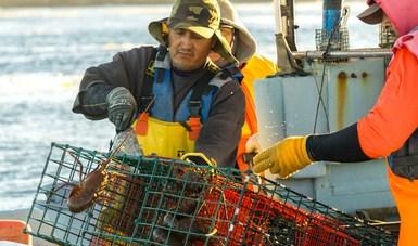 A partir del primer día de marzo entró en vigor la veda para erizo rojo en los estados de Baja California y Baja California Sur. En estas entidades también tiene lugar la veda temporal fija de langosta.