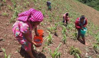 La Secretaría de Agricultura y Desarrollo Rural invita a productoras a capacitarse en los seminarios en línea que pone en marcha, en los que acceden a conocimientos y recomendaciones de centros de investigación.