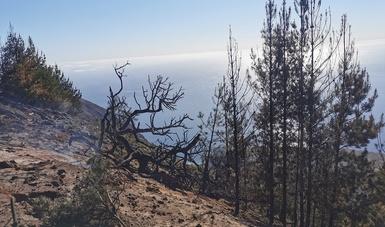 Se detecta, combate y liquida incendio forestal en la zona norte de la Reserva de la Biósfera Isla Guadalupe