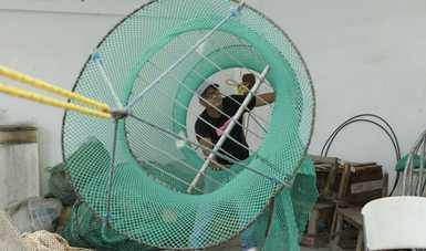 Preparan pescadores de camarón de altamar artes de pesca que cumplen con el uso correcto de los Dispositivos Excluidores de Tortugas
