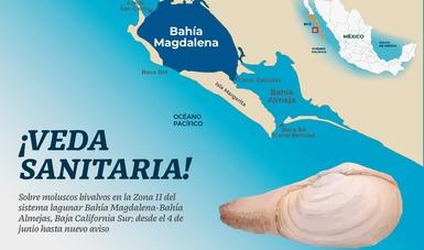 Establecen veda de moluscos bivalvos en un sector de la laguna Bahía Magdalena-Bahía Almejas, Baja California Sur.