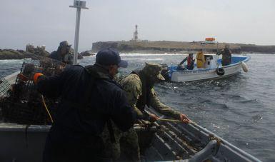 Autoridades federales aseguran trampas langosteras y caracol rosado en Baja California y Quintana Roo