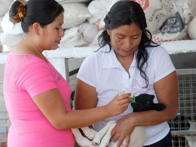 Las entidades con mayor participación de las mujeres en el medio rural son Puebla, Oaxaca, Guerrero y Chiapas.