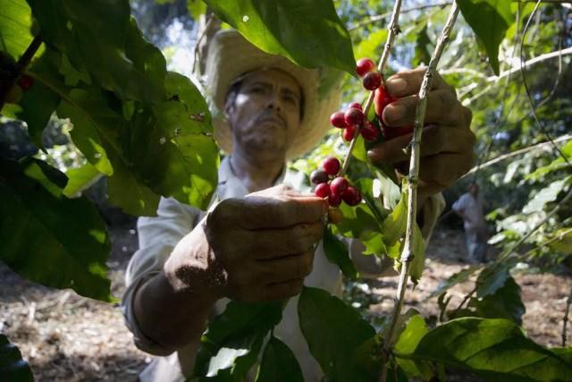 Empleo para Productores de café en Guerrero