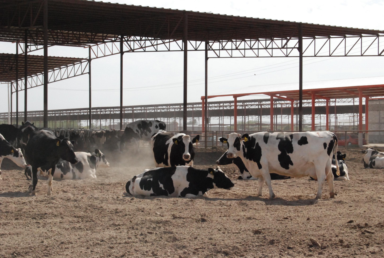 El SENASICA subrayó la relevancia y responsabilidad que implica este reconocimiento, por lo que exhortó a los productores ganaderos de Nayarit a mantener su trabajo en favor de la sanidad.