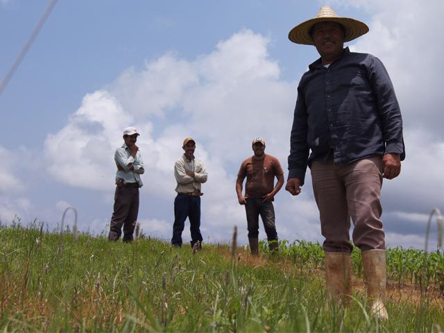 Productores zacatecanos que obtenían dos toneladas de maíz por hectárea, ahora cosechan entre ocho y 10 toneladas.