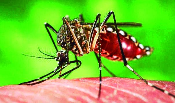 Este año se han detectado 18 mil casos de dengue y 9 mil 222 de chikungunya.