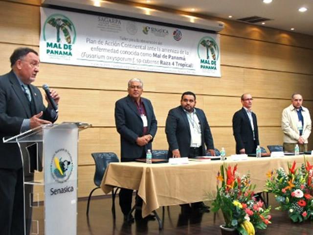 Integran técnicos centroamericanos y de la SAGARPA Plan de Acción Continental para proteger cultivos de plátano.