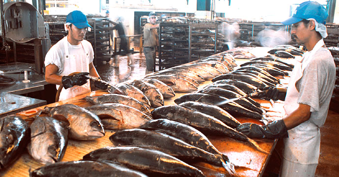 """Resolución definitiva de la OMC favorable a México en contra del etiquetado de atún """"Dolphin – Safe"""" de los EE.UU."""