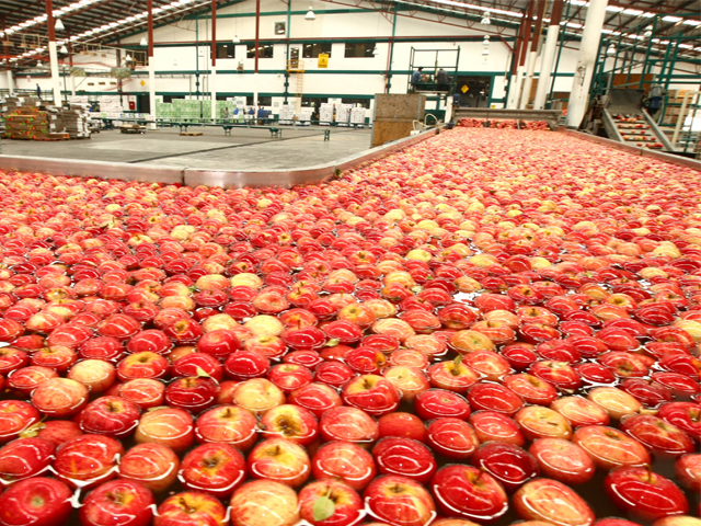 Las exportaciones de productos agroalimentarios (incluye agricultura, ganadería, pesca y agroindustria) totalizaron 20 mil 324 millones de dólares hasta el tercer trimestre del año.
