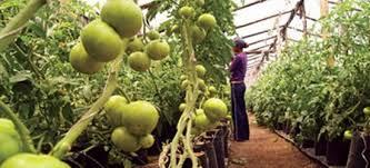 Participará México en reunión de la Junta Interamericana de Agricultura