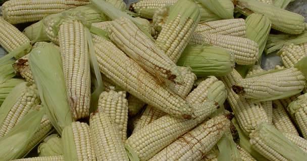 Prevé SAGARPA cerrar 2013 con producción agrícola récord