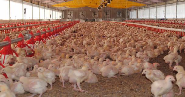 El DF era la última entidad federativa que se encontraba en fase de erradicación de la enfermedad de Newcastle que afecta a las aves, por lo que el país adquirirá en breve el estatus mundial de libre de esa enfermedad