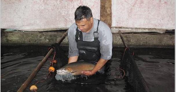 Transfiere INAPESCA biotecnología para cultivo de trucha en granjas acuícolas