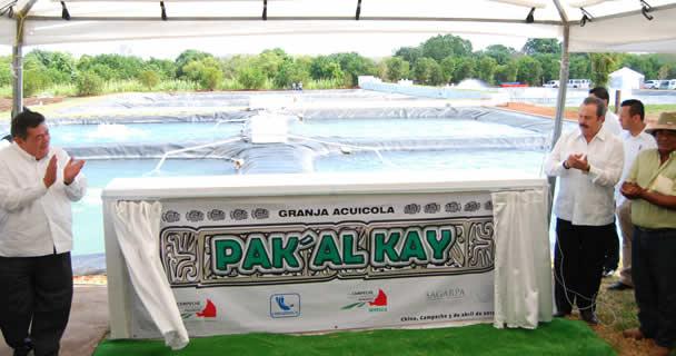 Impulsan SAGARPA y Gobierno de Campeche proyectos acuícolas