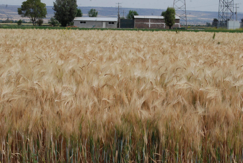 De acuerdo con un reporte del Servicio de Información Agroalimentaria y Pesquera (SIAP), el volumen del subsector agrícola registró un alza de 13.9%.