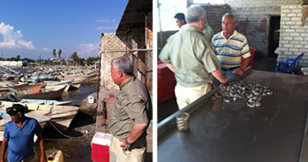 Garantizado el abasto de pescados y mariscos en el país: CONAPESCA