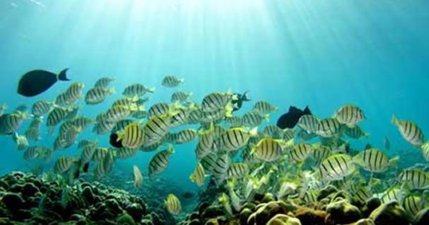 En las zonas de refugio pesquero totales permanentes, no podrá llevarse a cabo ninguna actividad de pesca comercial, deportiva-recreativa o de consumo doméstico sobre ninguna especie de flora y fauna acuática, detalla el DOF.