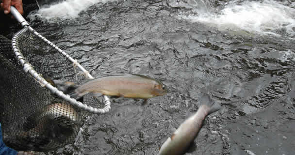 Busca gobierno federal garantizar la seguridad alimentaria con más y mejor industrias pesquera y acuícola: Conapesca