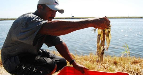 Con el Plan de Manejo Pesquero del Sistema Lagunar en la zona se protege el desarrollo y reproducción sustentable de 21 especies de interés comercial y gran demanda en los mercados nacional e internacional.