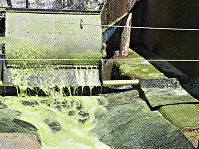 Aguascalientes, ejemplo internacional en la generación de energía eléctrica con biomasa de nopal: SAGARPA
