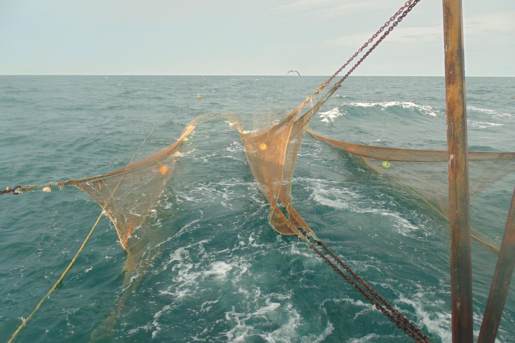 Investigadores del INAPESCA-SAGARPA diseñan nuevo sistema de arrastre para captura de camarón.