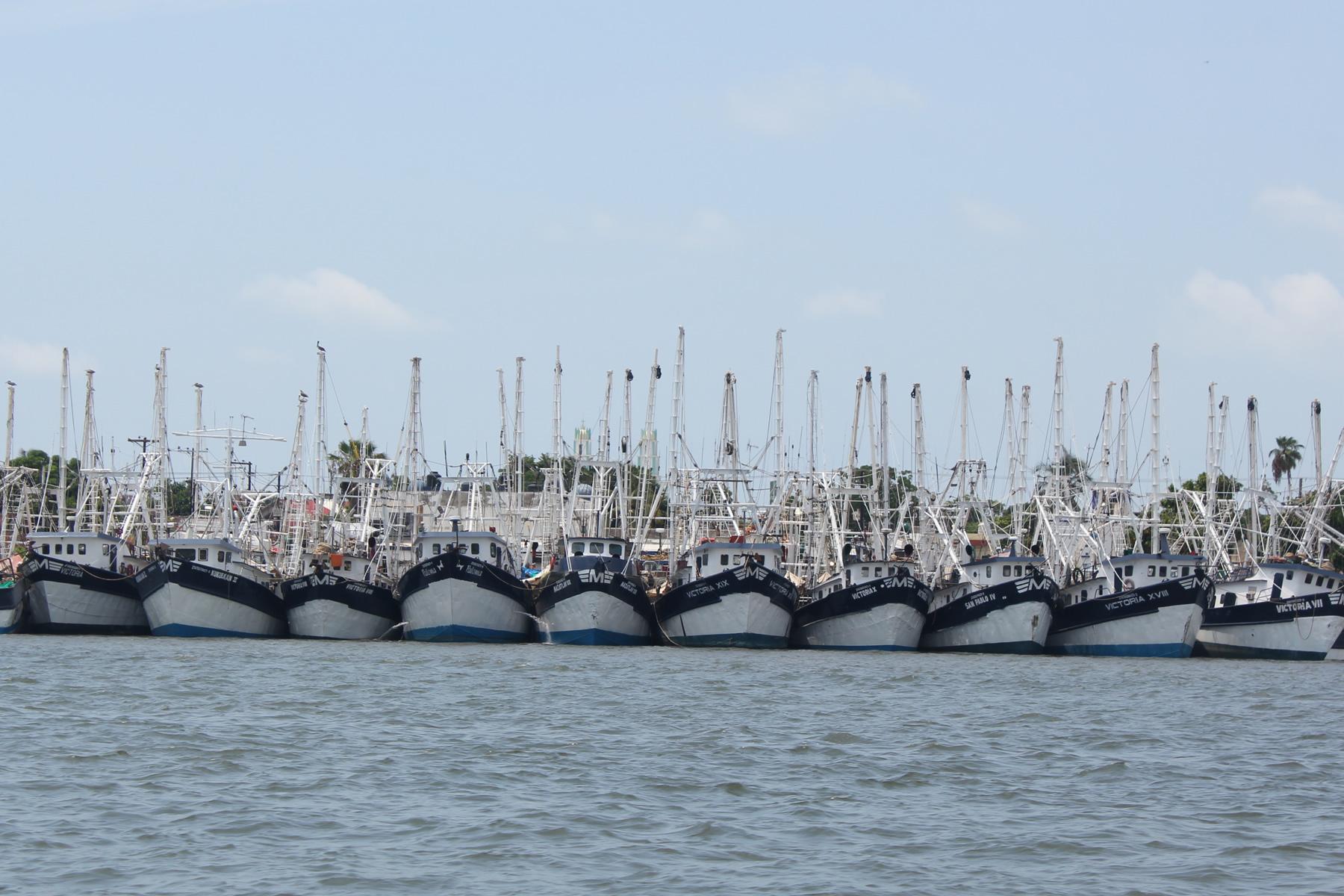 Acuerda el Comité Nacional de Pesca y Acuacultura los periodos de veda de camarón en el Golfo de México y Mar Caribe en 2015.