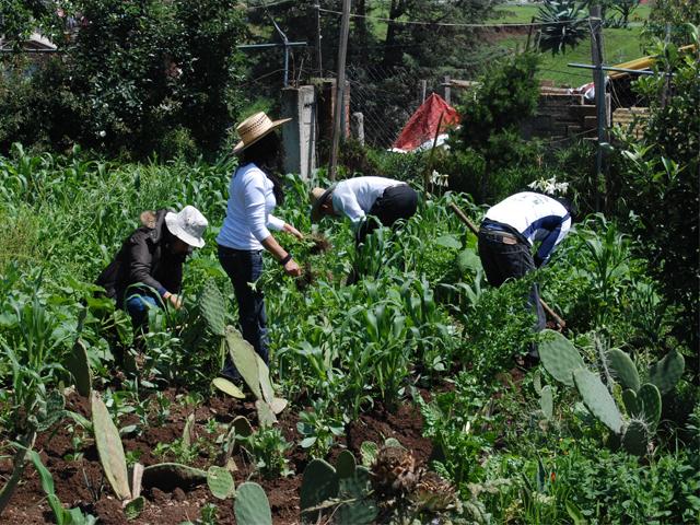 El Componente de Agricultura Familiar, Periurbana y de Traspatio incentiva la producción de alimentos, principalmente para el autoconsumo.