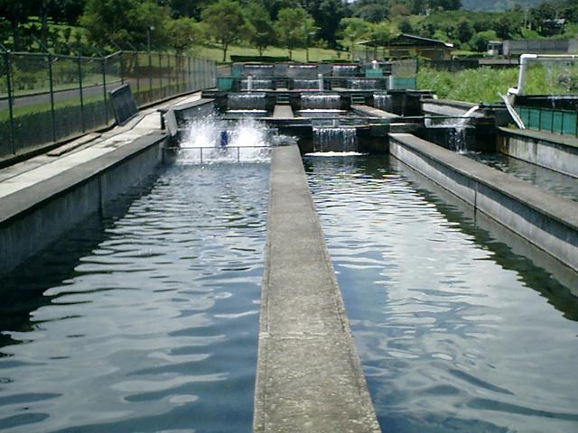 La Comisión Nacional de Acuacultura y Pesca (CONAPESCA) impulsará el crecimiento de la acuacultura en cinco mil hectáreas adicionales, lo que podrá concretarse en el mediano plazo.