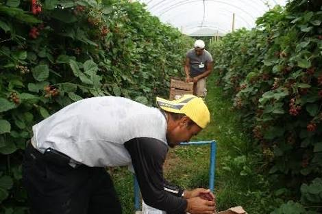 Programa de Trabajadores Agrícolas Temporales México-Canadá