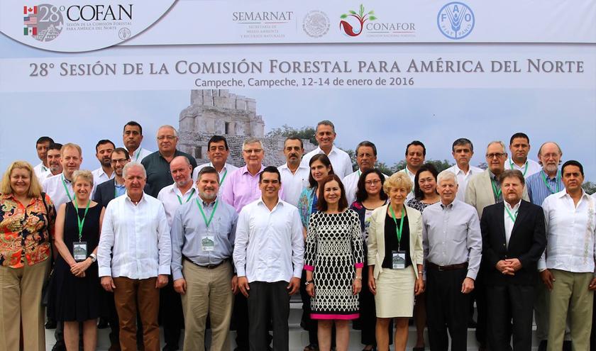 La COFAN evalúa el estado de los recursos forestales mundiales y la promoción del manejo forestal sustentable