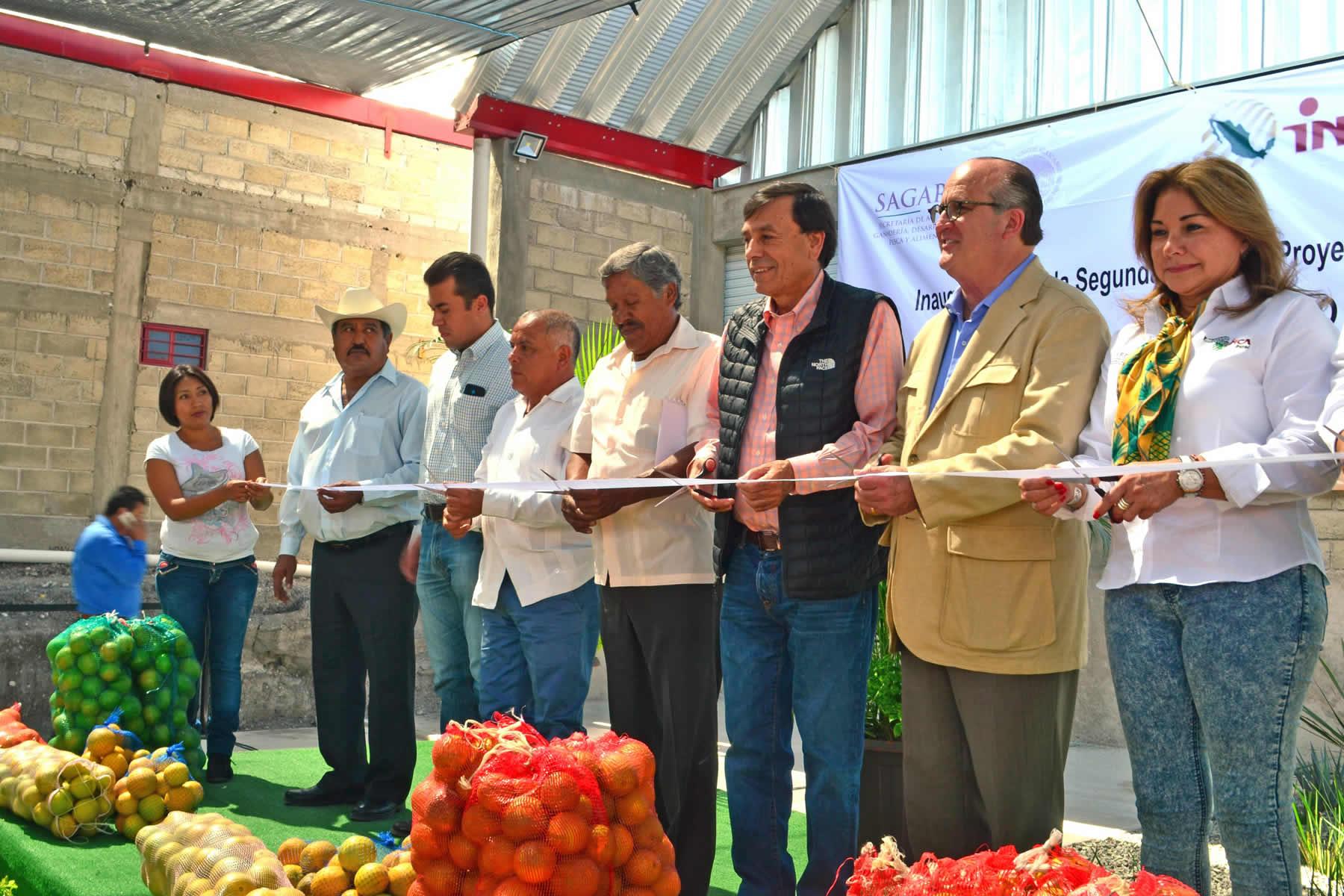 En Morelos, productores de zonas marginadas se convierten en exportadores de cítricos.