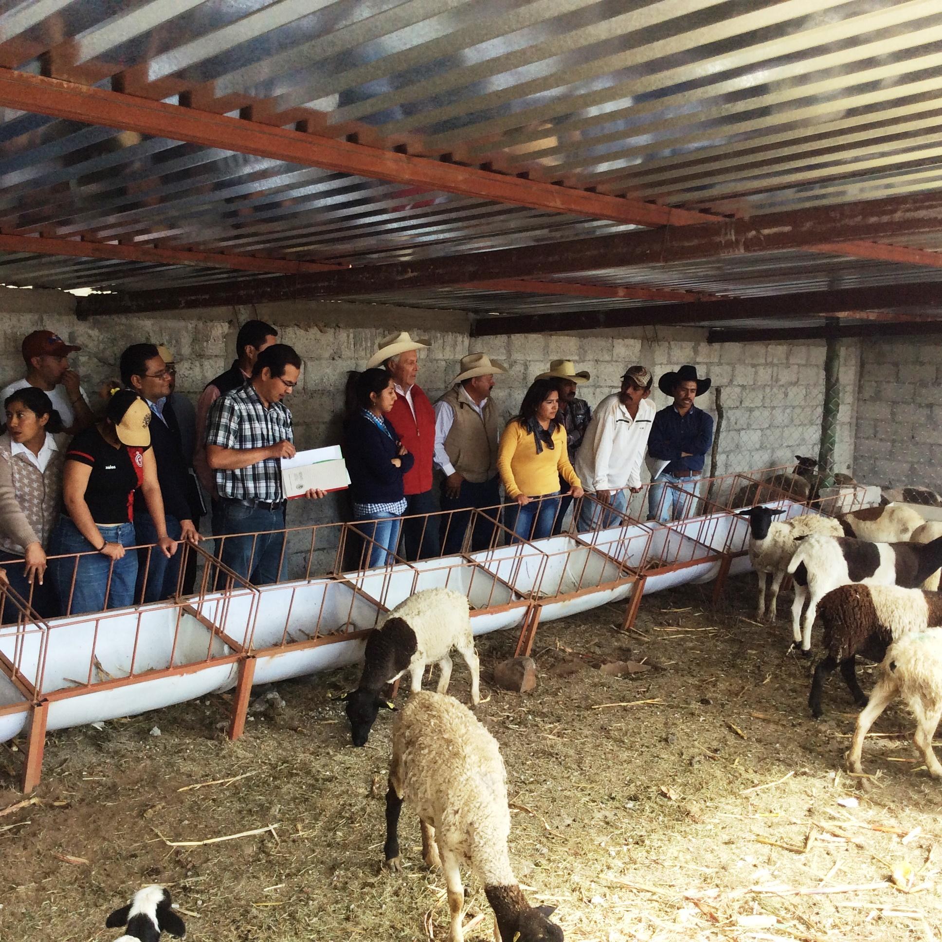 Diversos proyectos agroempresariales realizados por jóvenes emprendedores.