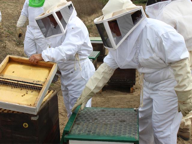 En 2015, el estimado de producción de miel es de 61mil 881 toneladas, de acuerdo con datos del SIAP.