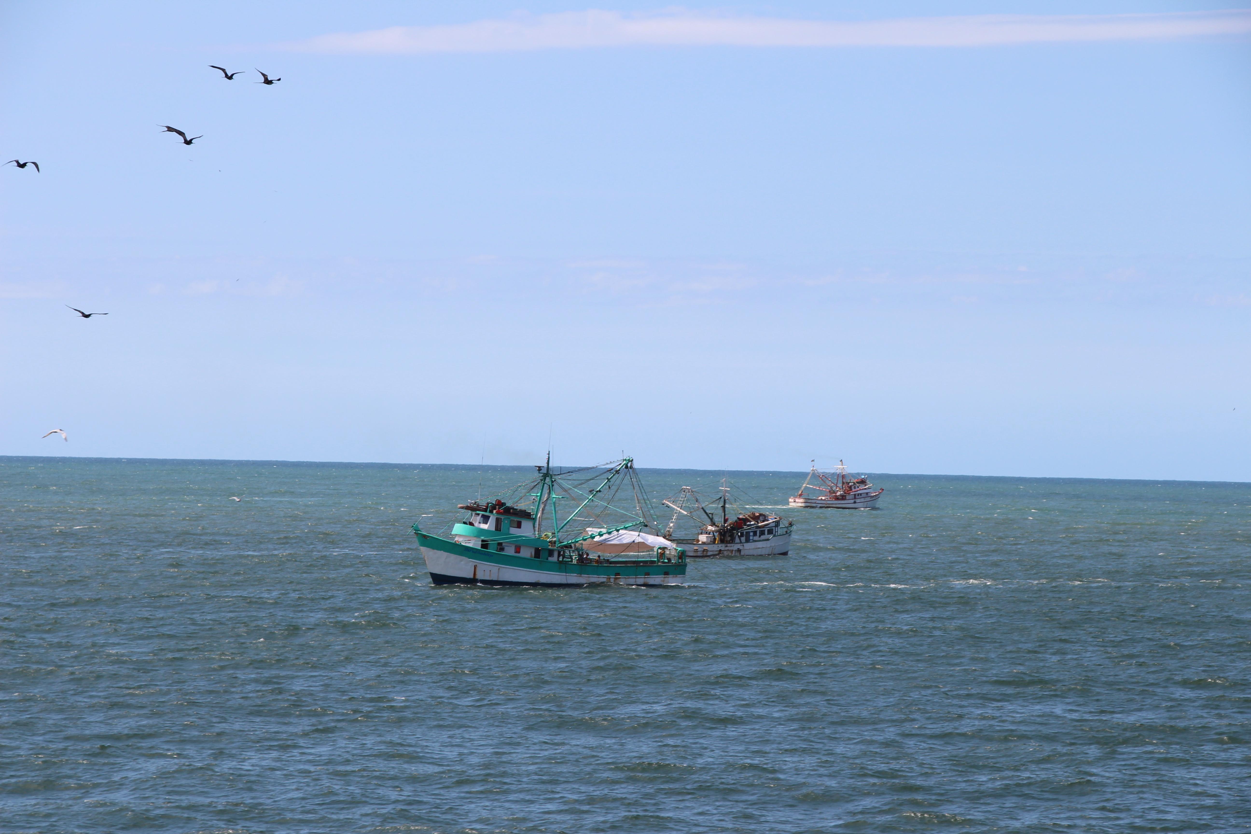 Activa CONAPESCA ventanillas para que los productores pesqueros y acuícolas se inscriban a los programas de apoyo a la productividad.