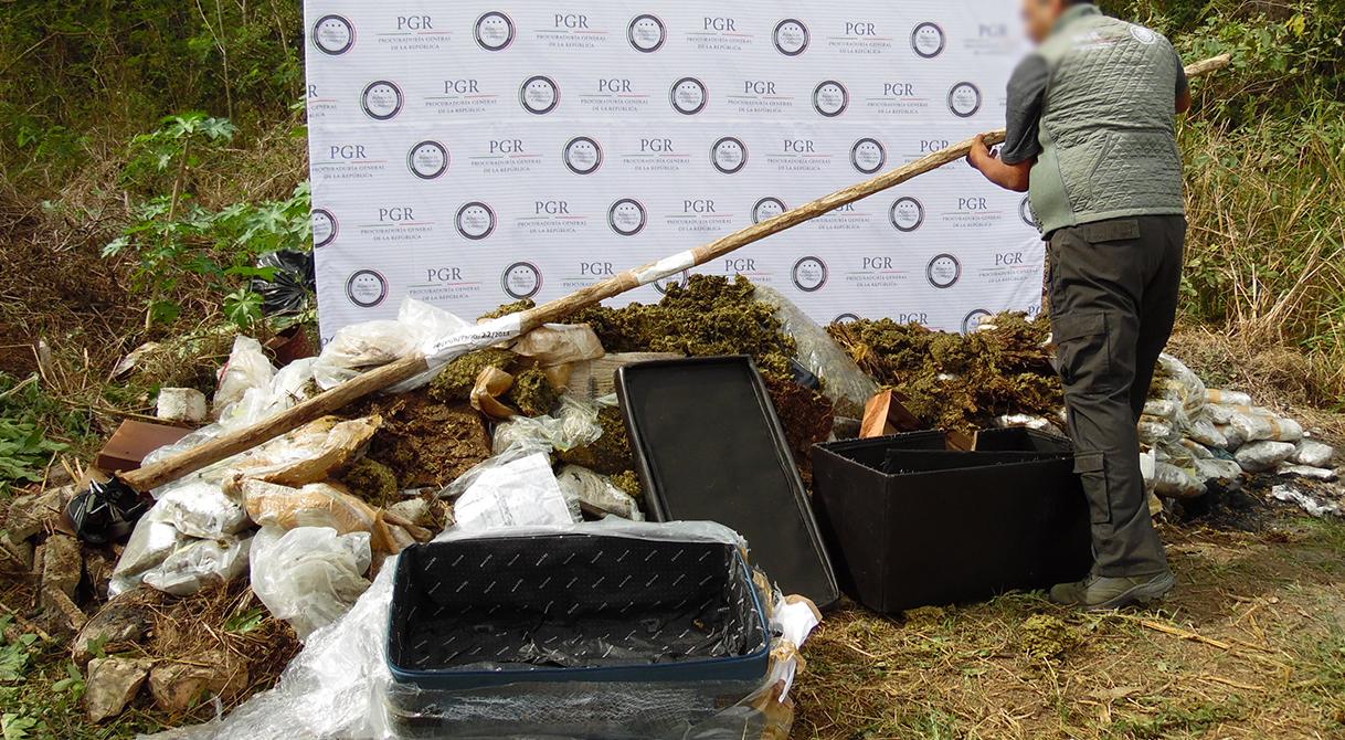Destruye PGR Yucatán pepino de mar, máquinas tragamonedas, discos apócrifos e incinera más de 100 kilos de droga.