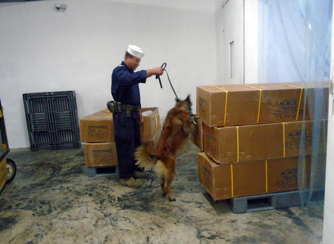 CONTENEDORES QUE TRANSPORTABAN PESCADO CONGELADO PRESUNTAMENTE CONTAMINADO CON COCAINA