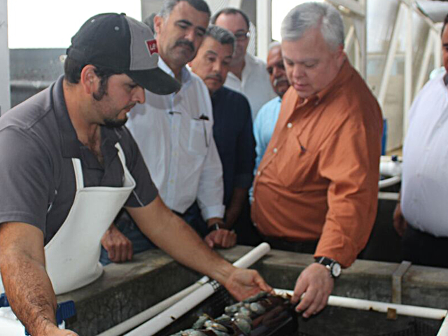 Supervisa CONAPESCA avances de cooperativistas de BCS en producción acuícola de abulón.