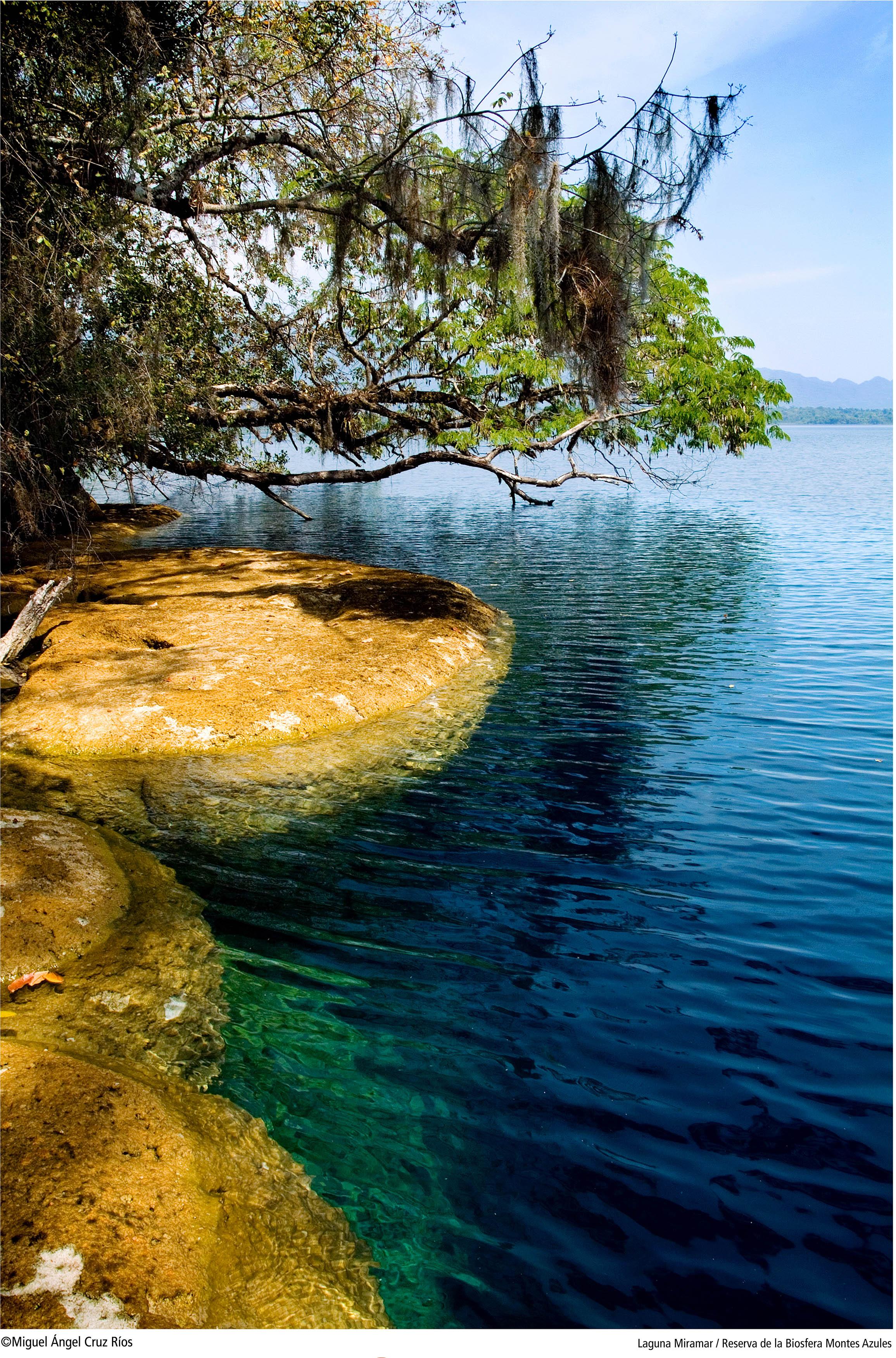 Fue decretada en 1978 como Zona de Protección Forestal y la Reserva Integral de la Biosfera. Fotos: Miguel Ángel Cruz Ríos.
