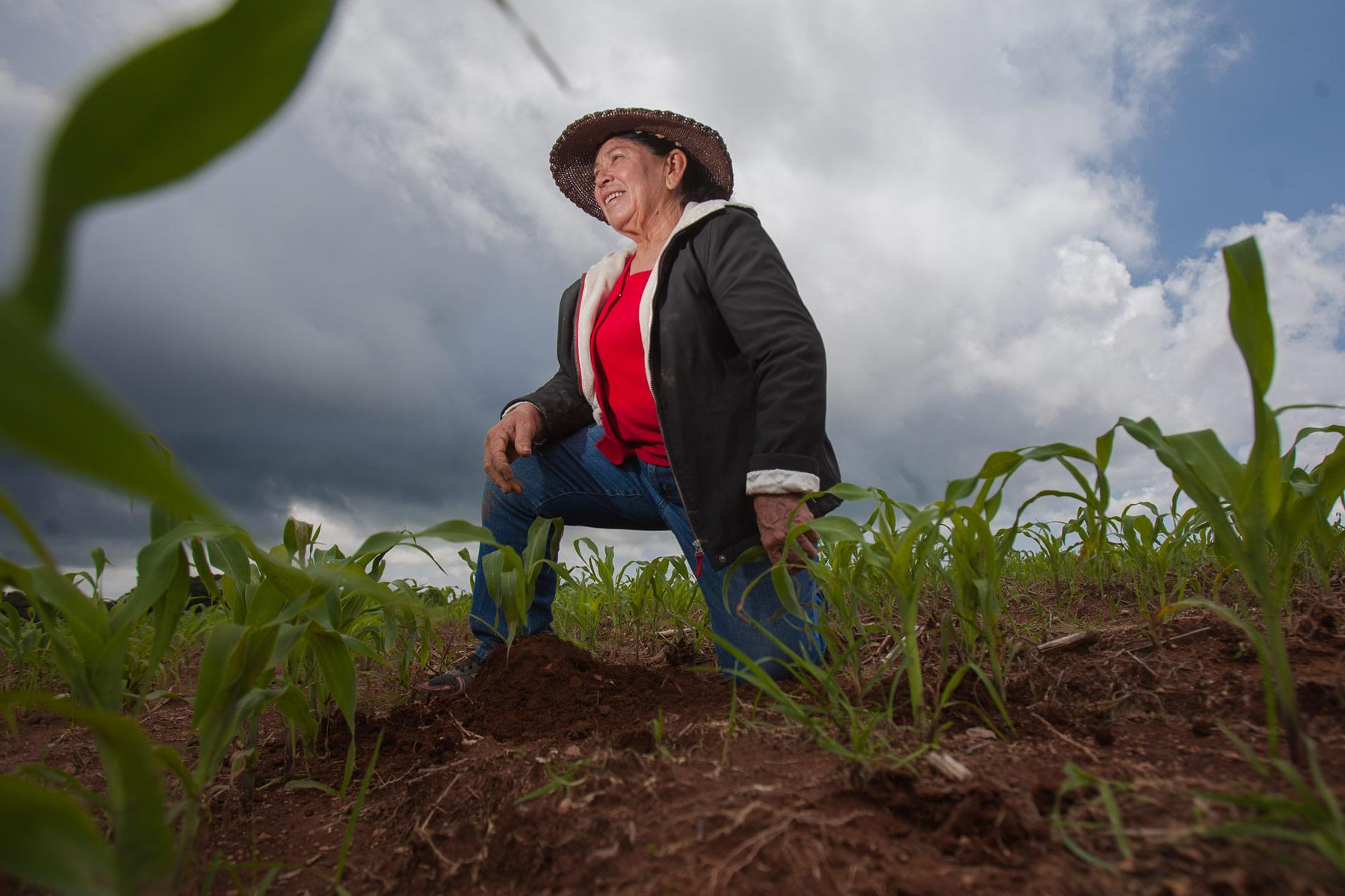 El 85.8% de las mujeres se dedican a la agricultura; el 12%, ganadería, y el resto se dedican a la pesca y otras actividades productivas.