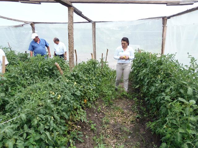 Sedesol y Sagarpa construyen Huertos Familiares en El Nayar