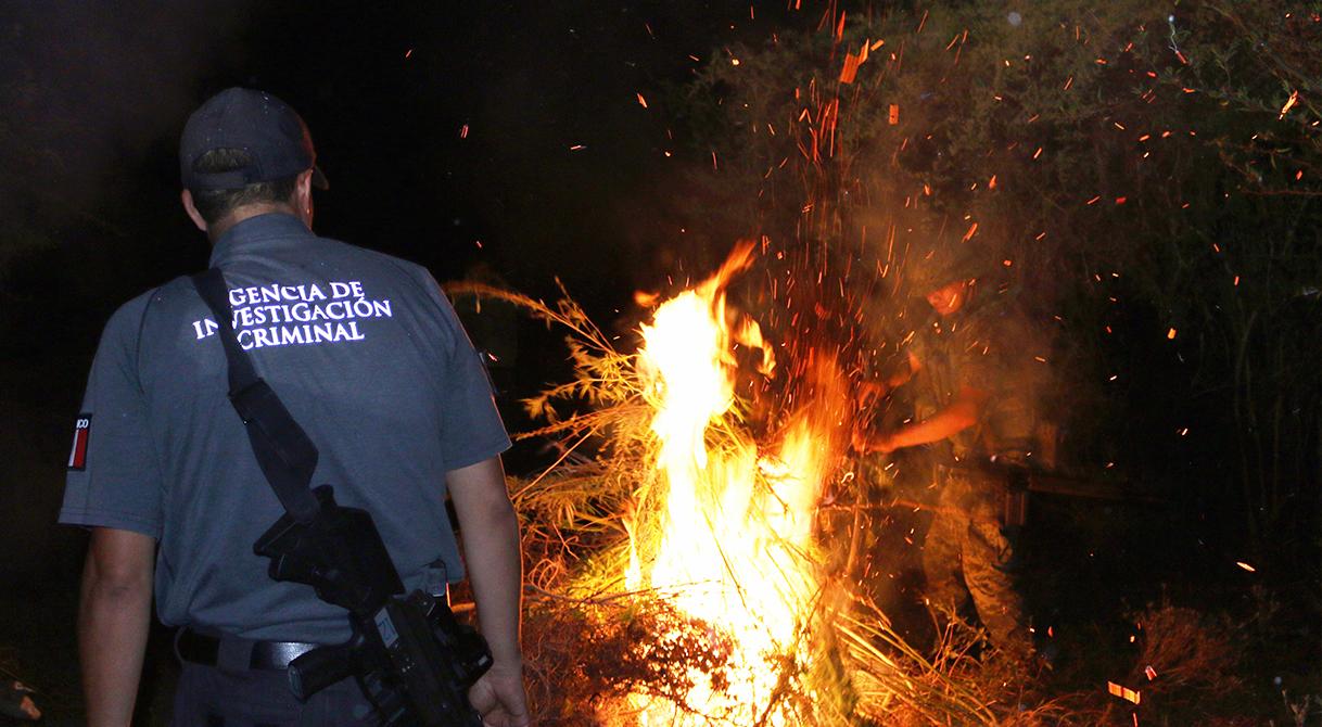 PGR destruye plantío de marihuana en Yautepec Morelos.