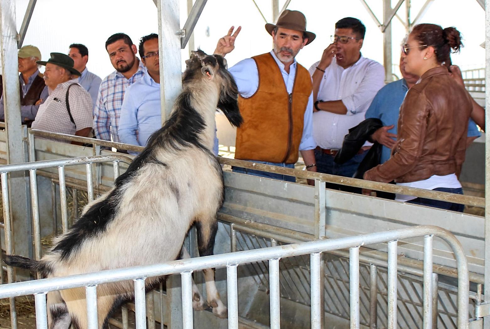 Recorrido del coordinador general de Ganadería, Francisco Gurría, por las instalaciones del Centro de Mejoramiento Genético Ovino.