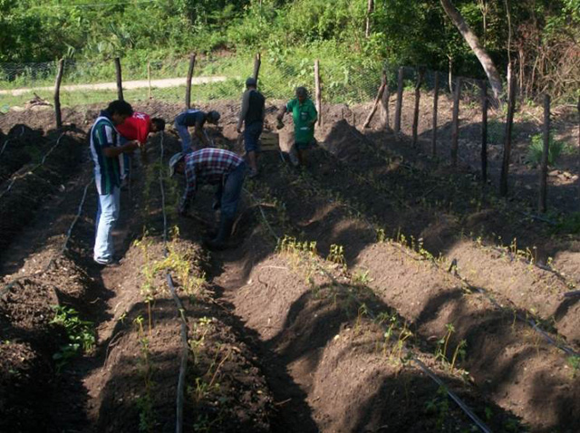 El Programa de Coinversión Social, apoya el proyecto Desarrollo de habilidades para la producción de alimentos en comunidades rurales, en el municipio de Xilitla, en la huasteca potosina.