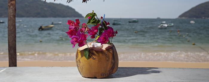 Fruta tropical obtenida del cocotero decorada con bugambilias.