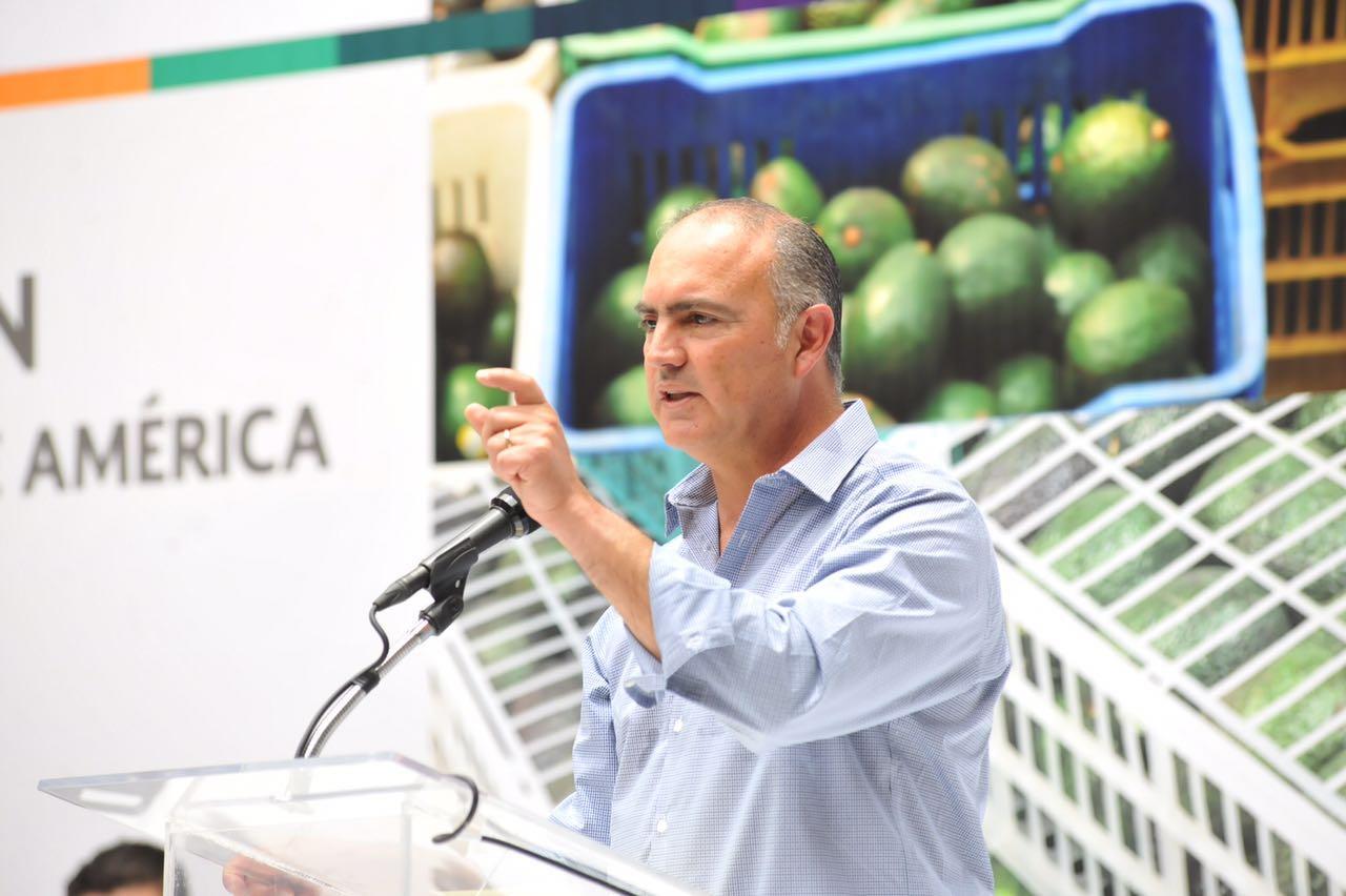 Inician en Jalisco proceso para exportar aguacate a Estados Unidos