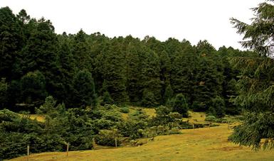 Producción forestal en México.